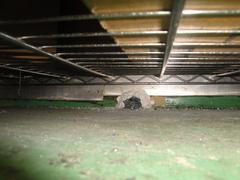 鼠の再発_2.jpg