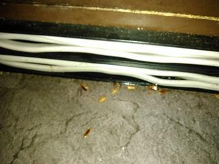 巾木隙間について